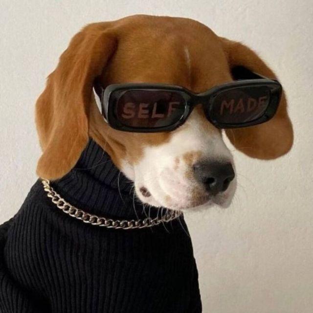 QQ:647043736